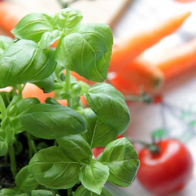 Basilikum und Tomaten