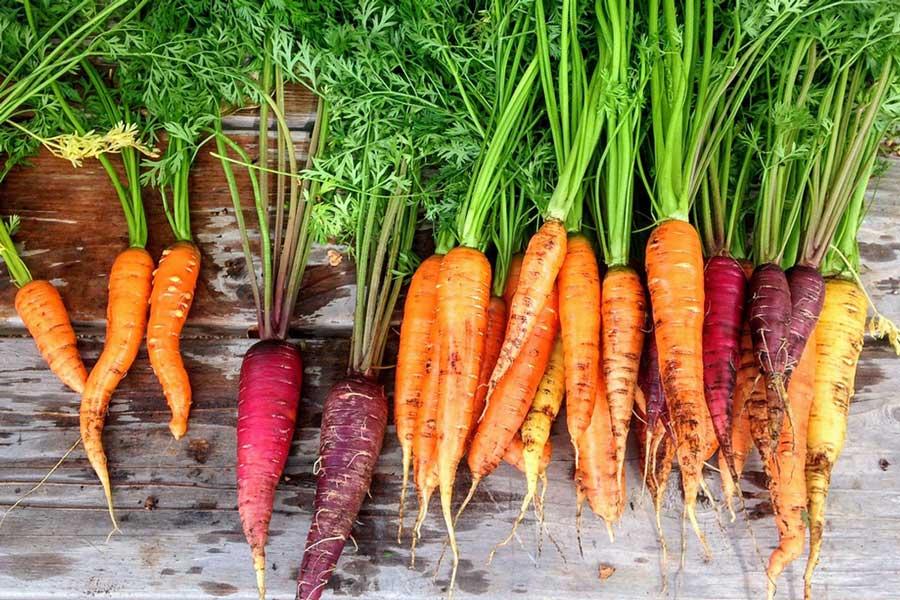 Bio-Karotten - natürliche Vielfalt